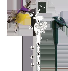 Manual Bird