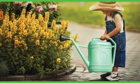 Asia Watering Can