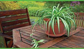 Like Ceramic Flower pot
