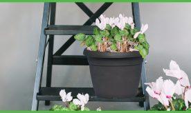 Tzabar Flower pot